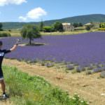 Relaxed Bike Tour in Provence among the lavender with a cyclist cheering