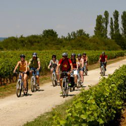 self-guided bike tours Through Burgundy Vineyards