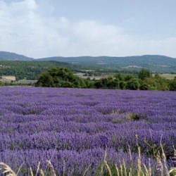 Best of Provence – Relaxed – 7 Night