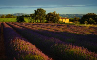 Top 5 Views in Provence