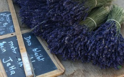 The Sights and Smells of Lavender on a Bike Tour